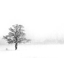 (Near) Whiteout by berndt2