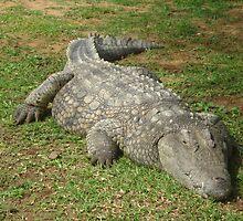 Nile Crocodile  by Irene  van Vuuren
