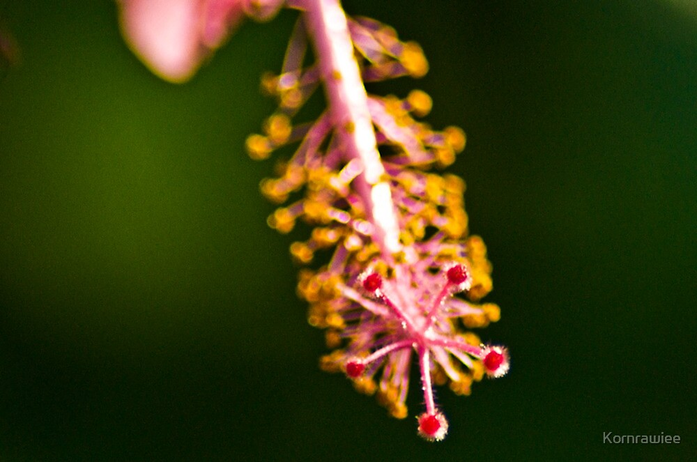 A proud her of the stamen... by Kornrawiee