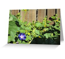 The Solitary Morning Glory Greeting Card