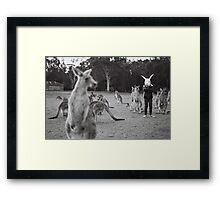 Le lapin et le kangourou Framed Print