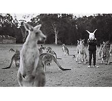 Le lapin et le kangourou Photographic Print