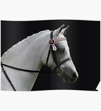 Grey Riding Pony Poster