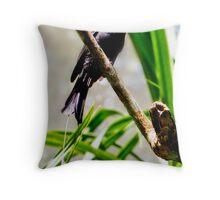 Ribbon-tailed or Paradise Drongo Throw Pillow