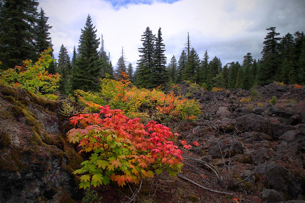 Coat Of many Colors by Charles & Patricia   Harkins ~ Picture Oregon