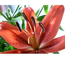 lilly red bright light Photographic Print