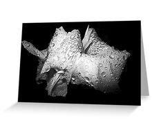 Raindrop Lily Greeting Card