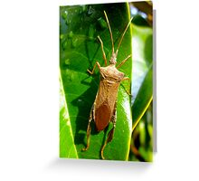 Leaf Footed Bug By Jonathan Green Greeting Card