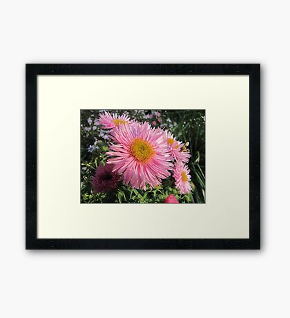 Pink coloured Framed Print