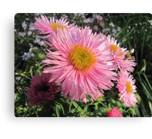 Pink coloured Canvas Print