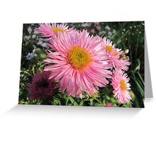 Pink coloured Greeting Card