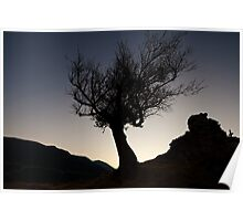Tree Silhouette at dusk Poster