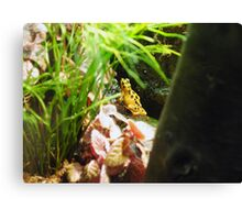 Yellow Frog Canvas Print