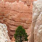 Lone Tree 4 by Brett Hanavan