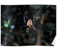 Spider At Home Poster
