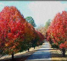 Autumn Lane by Kathy Bucari