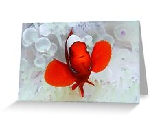 Red Clown Greeting Card