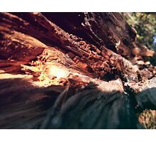 The Wooden Canyon Photographic Print
