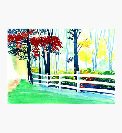 White Fence in the Forest Photographic Print