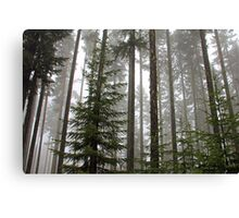 Foggy Forest Morning - Willamette National Forest Canvas Print
