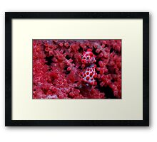 Red Nose Framed Print