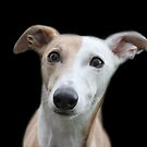 Stand alone greyhound x by Abigail Jennings