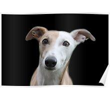 Stand alone greyhound x Poster