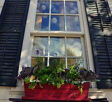 The Front Window by John  Kapusta