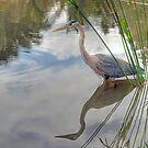 The Blue Heron by Eddie Yerkish