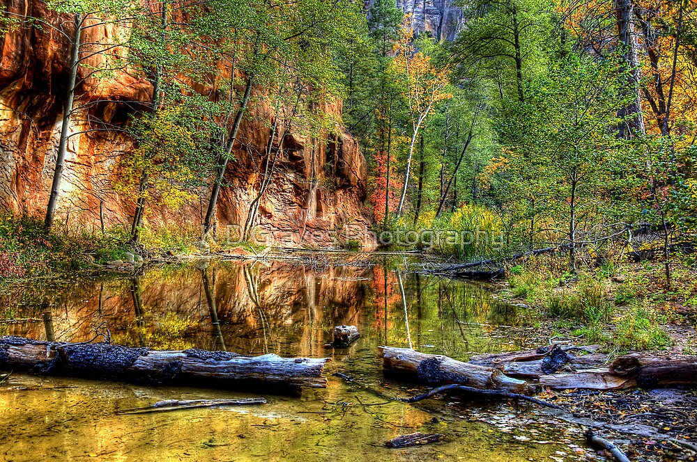 Fall Into The Creek by K D Graves Photography