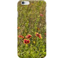 Cemetery Wildflowers – Colorful chaos iPhone Case/Skin