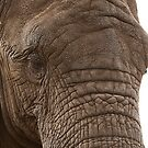 Gentle Giant by dunawori
