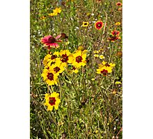 Cemetery Wildflowers – Nature's bouquet Photographic Print