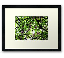 Colours of September Framed Print