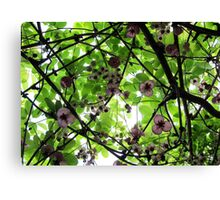 Colours of September Canvas Print