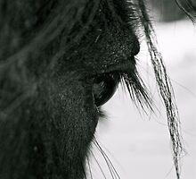 """Eye"" (Horses Eye) by Lou Wilson"
