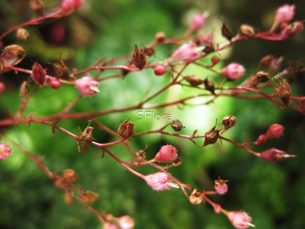I dream of Spring by Sukhwinder Flora