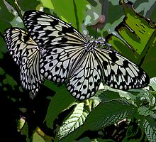 Butterflies Relaxing in the Sun by Aaron Alviano