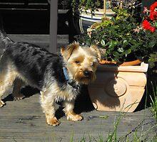 Leo in the garden by aldfreckian