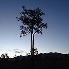 tree all alone  by myhobby