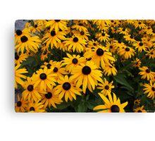 Beautiful Yellow Flowers Canvas Print