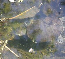 Turtle by cathywillett