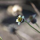 White flower by cathywillett