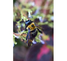 Bee Garden Photographic Print
