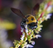 Bee Garden 2 by jrphotography05