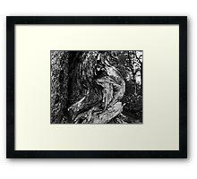 Aged Smokey Mountain Cedar Framed Print