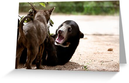 Puppy & baby sun bear playing by Krystle  Don