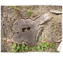 Top view of an old stump of cut tree cracked and rotten core Poster