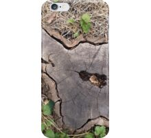 Overhead view of an old stump of cut tree iPhone Case/Skin