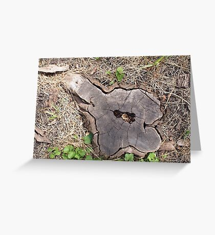 Overhead view of an old stump of cut tree Greeting Card